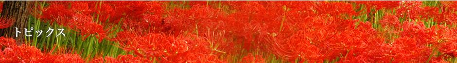 【イベント】若光祭特別企画「高麗郡七色行例」<高麗神社~聖天院> 5/20(日)