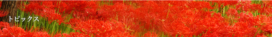 【イベント】6/25〈土)高麗神社で韓国伝統楽器演奏会(主催:高市国際交流協会・相談サロン)