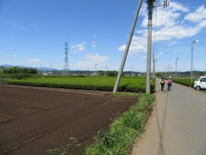 茶畑を歩く